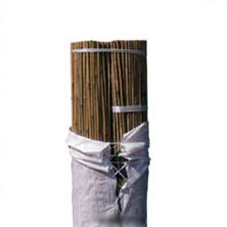 Tutor de bambu Bala 200 unidades 210 cm. diametro 16-18 mm.